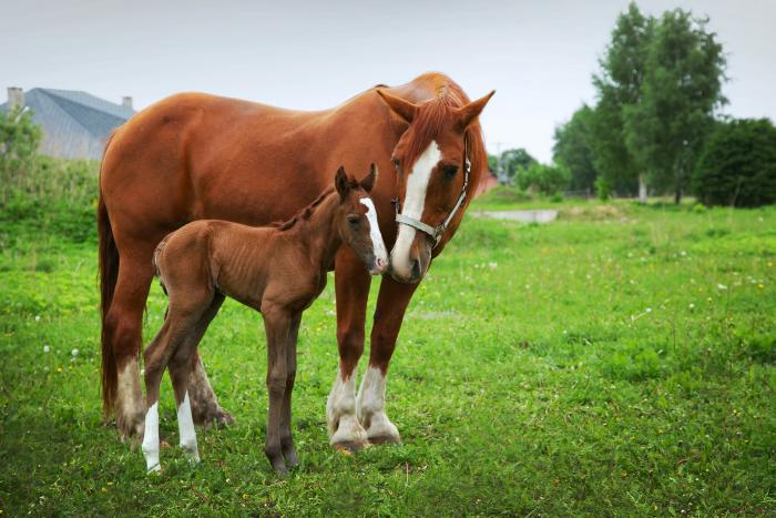 Equie Pregnancy Diagnosis